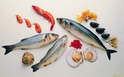 Продам  рыбу и морепродукты  оптом и в розницу. Николаев.Херсон.